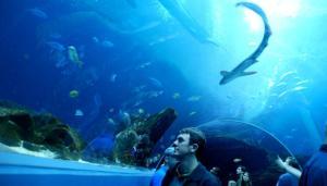 aquarium-tunnel-2